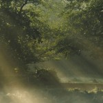 La-forêt