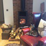 Une photo de notre chat Noel profitant de son temps libre