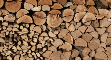 Bienfaits environnementaux de la combustion du bois