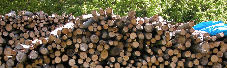 Comment identifier du bon bois de chauffage?